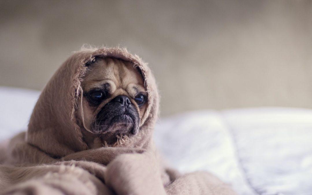 Der ultimative Schlafguide – meine 20 besten Tipps, damit du erholsam schlafen kannst