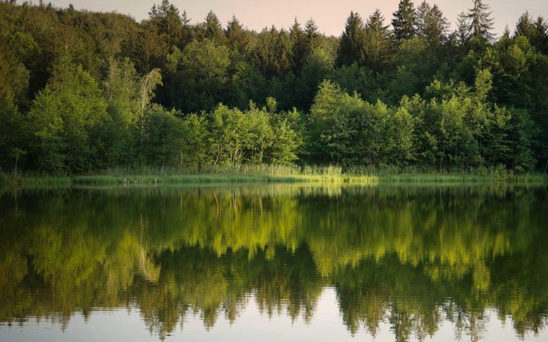 Wieso du Stille brauchst und was sie für dich tun kann
