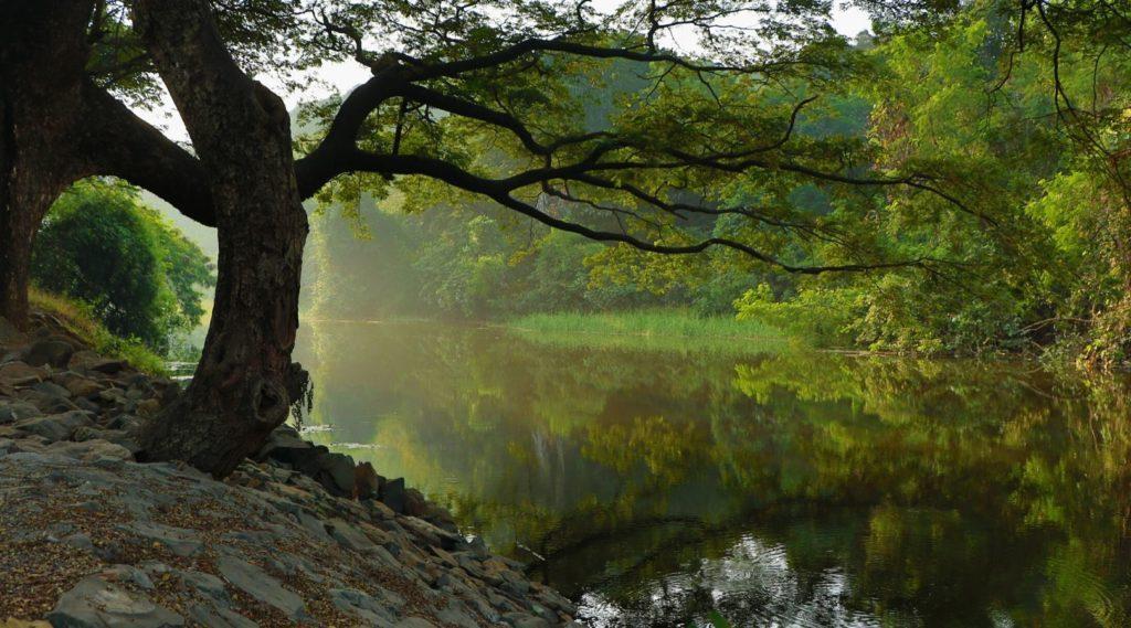 Verbinde dich mit der Natur