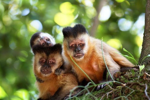 not my monkey not my circus
