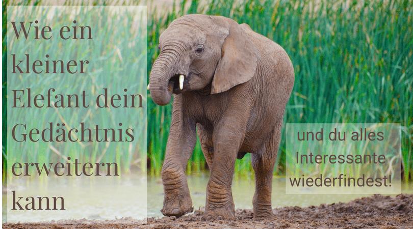 Evernote - Wie ein kleiner Elefant dein Gedächtnis erweitern kann